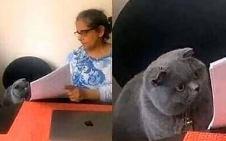 Historia Y Origen Del Meme Del Gato Reganado Y El Examen Mediotiempo