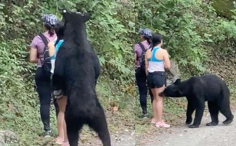 Oso sorprende a visitantes de Chipinque en Nuevo León